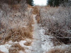 Does your trail look like this?