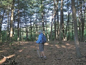 hiking in a Wilmington forest