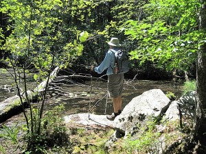 hiking in Harold Parker State Forest