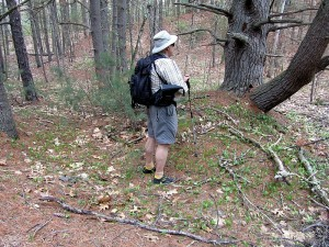 hiking in Pepperell forest