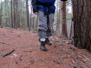 a trail in Great Brook Farm State Park
