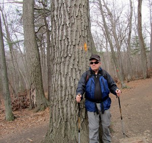 Middlesex Fells near large oak tree