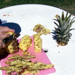 removing outer surface of pineapple with Gerber Camp Kitchen knife