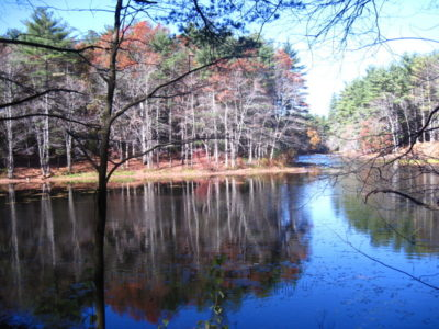 Pond on today's hike in Harold Parker Forest